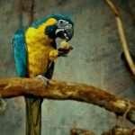 pappagallo che mangia