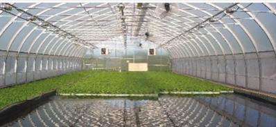 Una serra in acquaponica nei dintorni di Montreal Floating per gli ortaggi più allevamento pesce