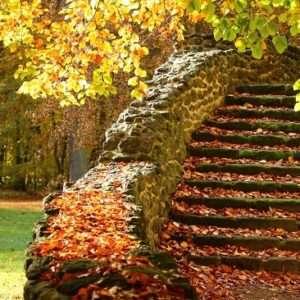 movimento è anche fare le scale