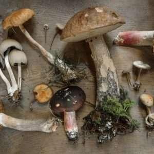funghi vari tipi