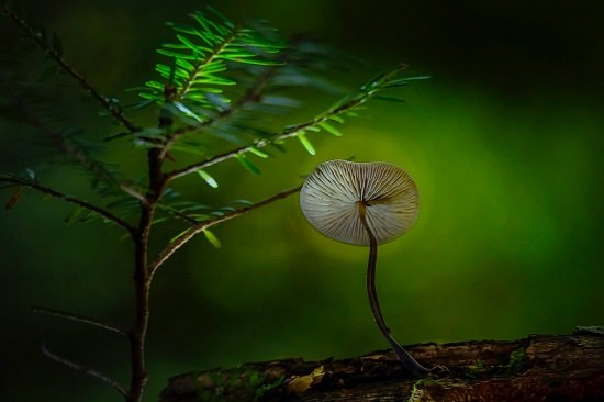 fungo e pianta
