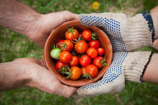 pomodori e mani biologico francese